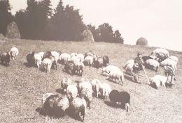 haystack1