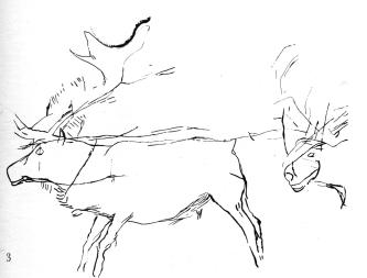 combarelles reindeer