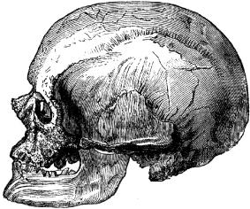 Cro-Magnon-male-skull